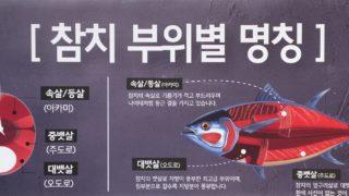 韓国語でマグロの部位の名称は何という?大トロ・中トロ・赤身など